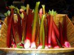 rhubarb in basket