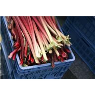 Reddish Pink Rhubarb Stalks