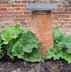 rhubarb forcing chimney pot