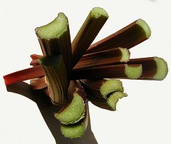 rhubarb stalk